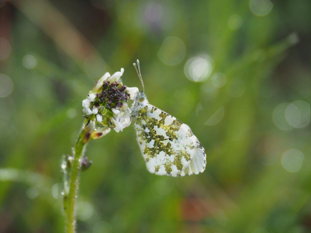Papillon sur son tabouret